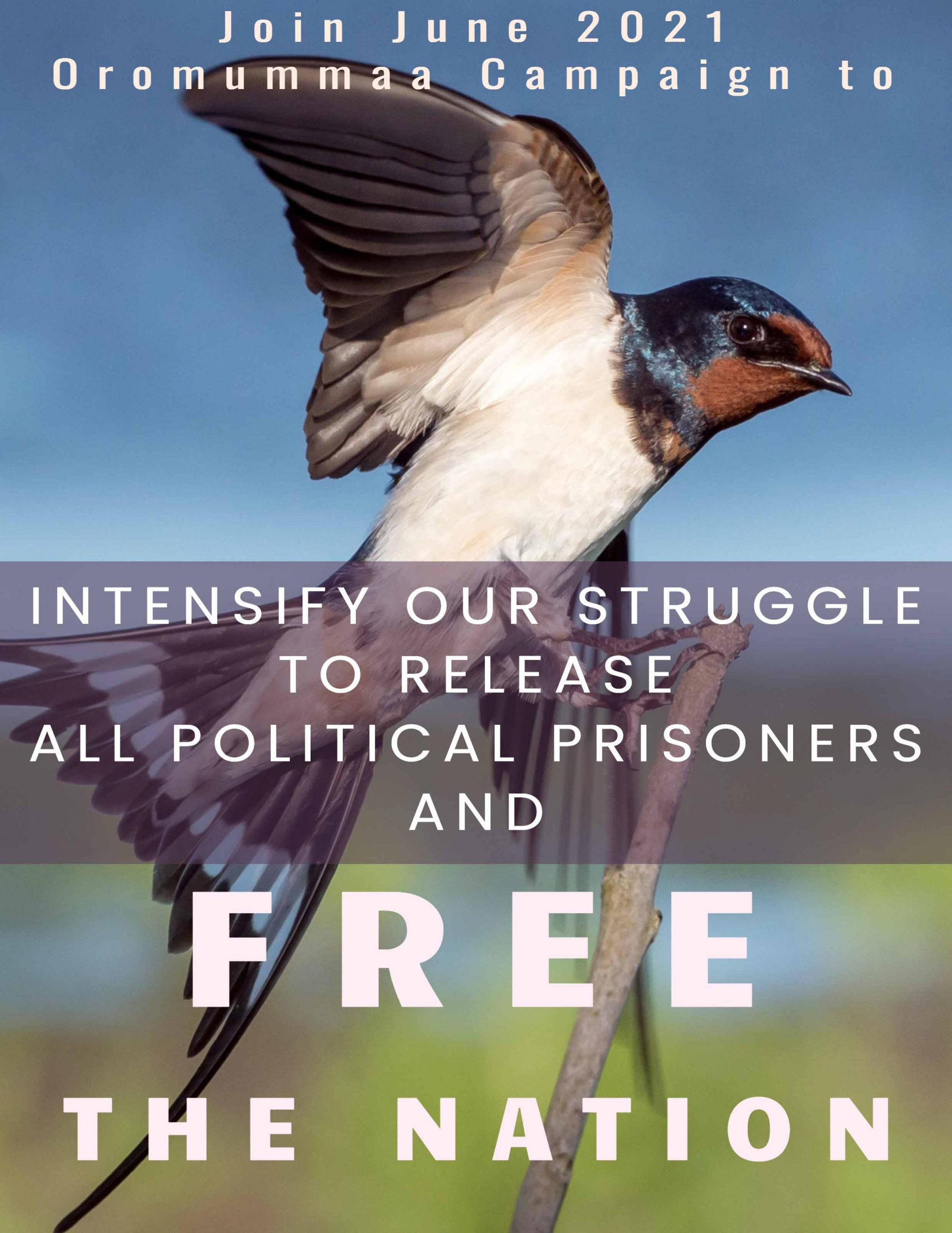 Free the Nation